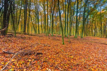 Beautiful european forest at fall