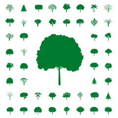 Collection of Green Trees. Vector icons.
