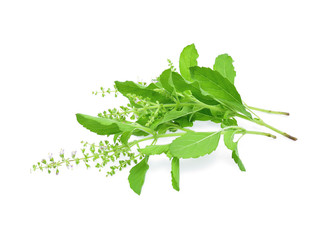 Blossoming basil on white background