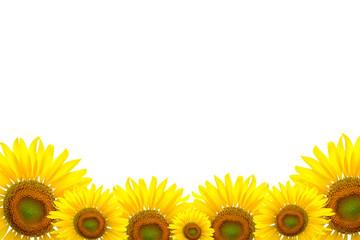 Sunflower Background for presentation/Sunflower Background