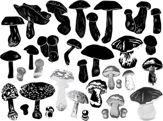 black mushrooms sketches large collection on white
