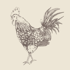 Vintage design with rooster