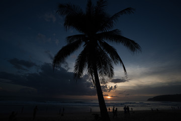 Palm tree and silhouettes of people walking on the beach during beautiful sunset. Summer concept