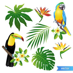 Set of tropical flowers, leaves and birds. Toucan. Vector.