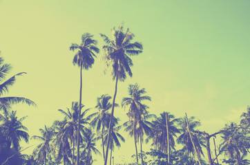 coconut tree Vintage