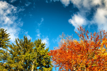 Colorful tree tops and blue cloudy sky. Autumn. Copyspace