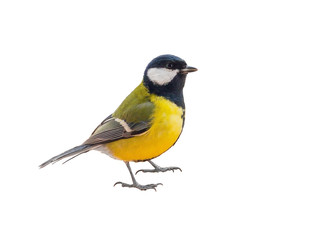 Printed roller blinds Bird Tit bird isolated on white background
