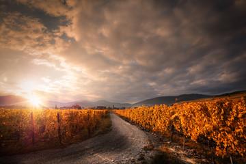 Winnica jesienią