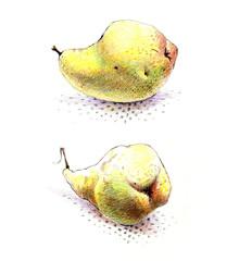 pear, drawing, illustration