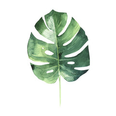 Tropical Hawaii leaves palm tree in a watercolor style isolated.