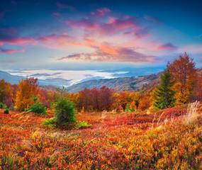 Wall Mural - Splendid autumn sunrise in the Carpathian mountains, Borzhava ri