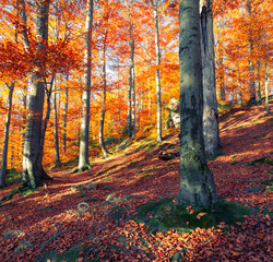 Canvas Prints Autumn Beautiful view of the autumn forest.