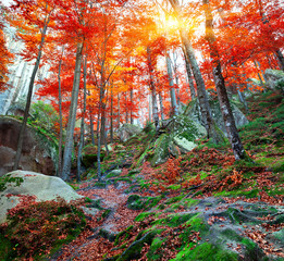Colorful autumn scene in the mountain forest.