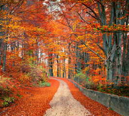Poster de jardin Brique Colorful autumn csene in the mountain forest