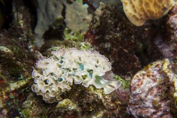 Unterwasser - Riff - Wrack - Flugzeugwrack - Schwamm - Taucher - Tauchen - Curacao - Karibik - 4K