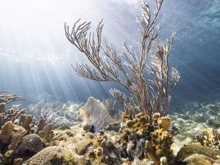 Unterwasser - Riff - Koralle - Schwamm  - Tauchen - Curacao - Karibik