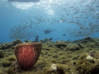 Unterwasser - Riff - Fischschwarm - Schwamm - Taucher - Tauchen - Curacao - Karibik