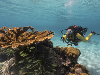 Unterwasser - Riff - Koralle - Elchgeweihkoralle - Schwamm - Taucher - Tauchen - Curacao - Karibik