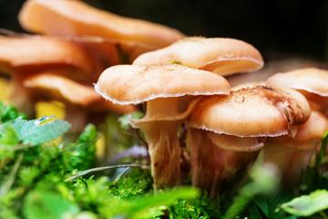 Pilze am Waldboden im Herbst