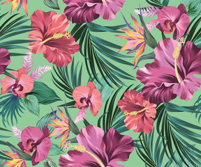 hibiscus vector pattern with amazing flowers