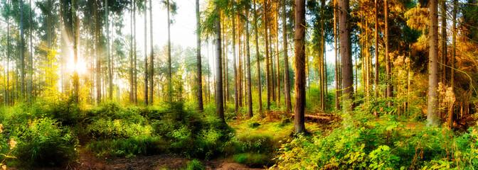 Wall Mural - Herbstlicher Wald bei Sonnenaufgang mit Sonnenstrahlen im Nebel