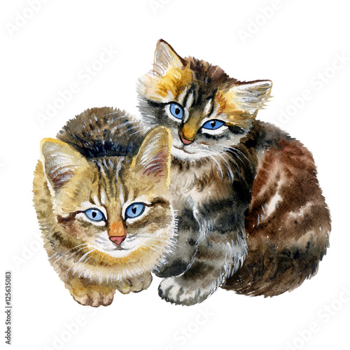 Watercolor Close Up Portrait Of Cute Shorthair Kittens Isolated On White Background Rare Tortoiseshell Colouration