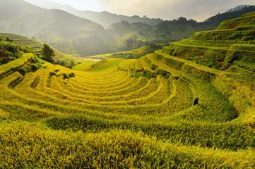 Woman working in Terraced rice fields, Mu Cang Chai, YenBai, vietnam