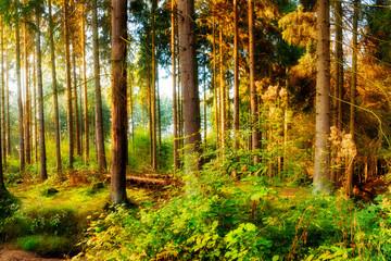 Herbstliche Szene im Wald bei Sonnenaufgang