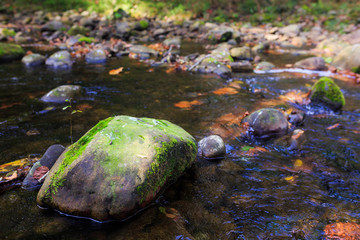 Moss on the rock in a river in autumn, Guriezo, Cantabria, Spain