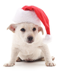 Dog in Christmas hat.