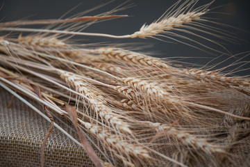 Bunch Of Dry Ripe Wheat Ears Laying On Sackcloth