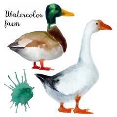 Naturalistic hand-draw watercolor farm bird