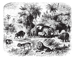 Group of animals, vintage engraving.