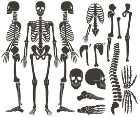 Human bones skeleton dark black silhouette collection. High detailed Vector Set of bones illustration.