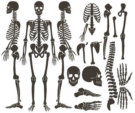 Human bones skeleton dark black silhouette collection. High detailed Vector Set of bones illustration.