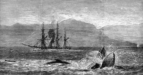 The sea serpent, vintage engraving.