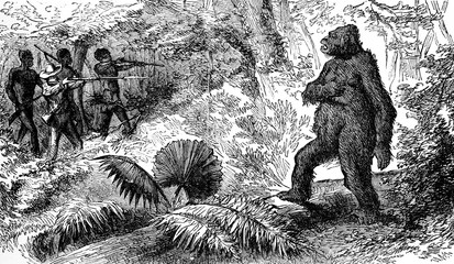 Country snakes. The death of gorilla, vintage engraving.