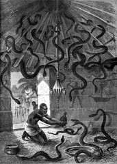 The snake charmer. Okali brought his students a black hen, vinta