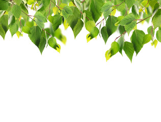 Green foliage frame on white background. Space for text.