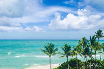 Miami Beach Palms