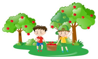 Two boys working in apple farm