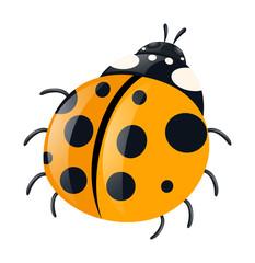 Ladybug with yellow wings