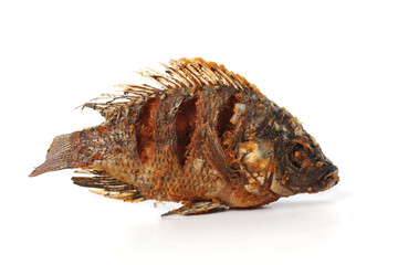 Fried Tilapia fish fried isolated on white background