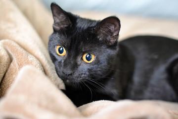 Black cat staring left