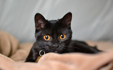 black kitten staring