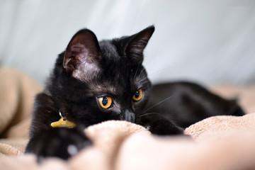 kitty peeking over blanket