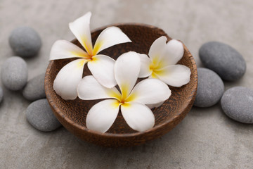 Beautiful Composition of frangipani in wooden bowl with spa stones