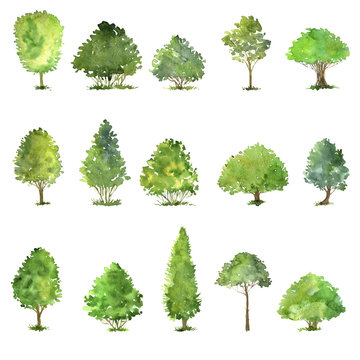 vector set of trees drawing by watercolor