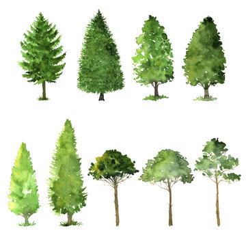 set of trees drawing by watercolor