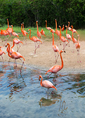 flamingos against green background